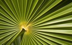 Beautiful Palmleave